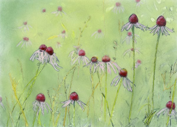Pale Coneflowers in a field