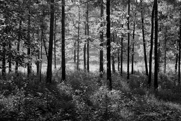Forest, Near Taladega, Alabama Photography Art | Rick Gardner Photography