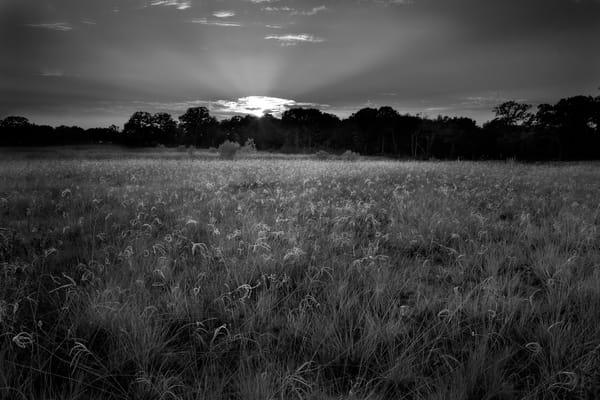 Sunset, Windmill Grass, Snook, Texas Photography Art | Rick Gardner Photography