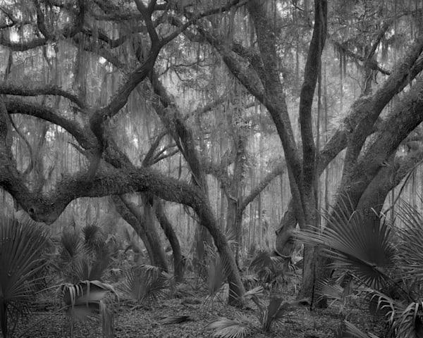Grove Of Oak Trees, Ossabaw Island, Georgia Photography Art | Rick Gardner Photography