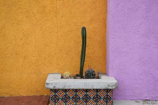 Cactus in Planter