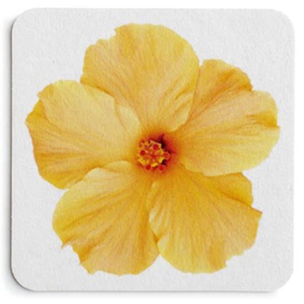Yellow Hibiscus On White Coaster Set | Bird In Paradise