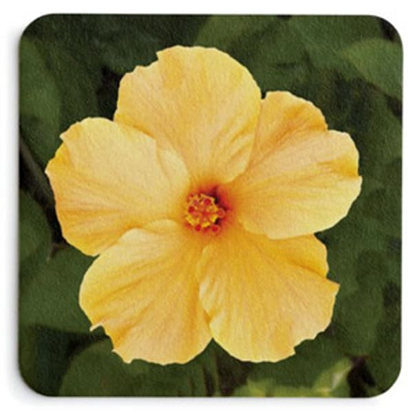 Yellow Hibiscus Coaster Set | Bird In Paradise