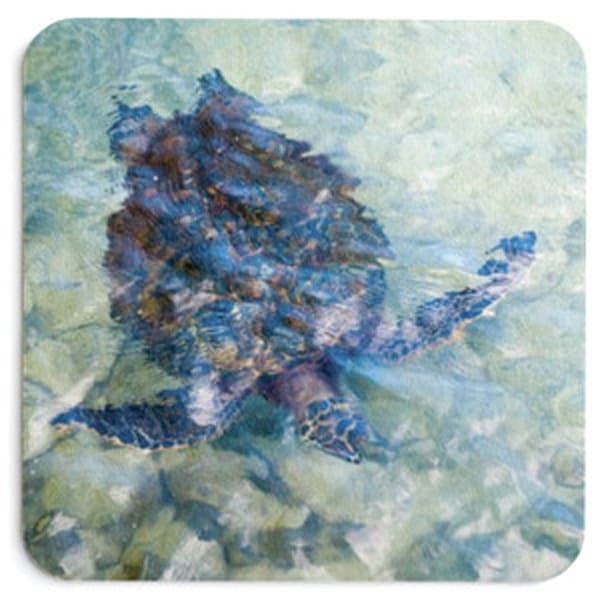Watercolor Turtle Coaster Set | Bird In Paradise