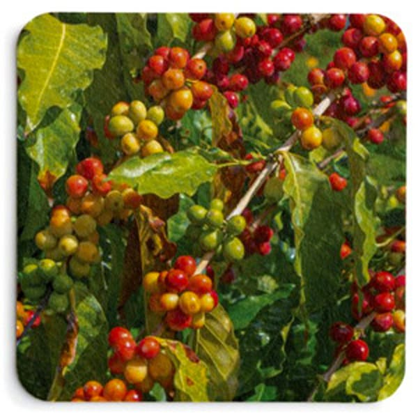 Colors Of Coffee Coaster Set | Bird In Paradise