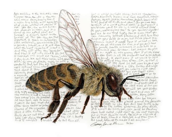 Honeybee2 Art   Greg Lewallen