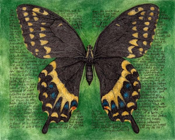 Papiliopalamedes Art   Greg Lewallen