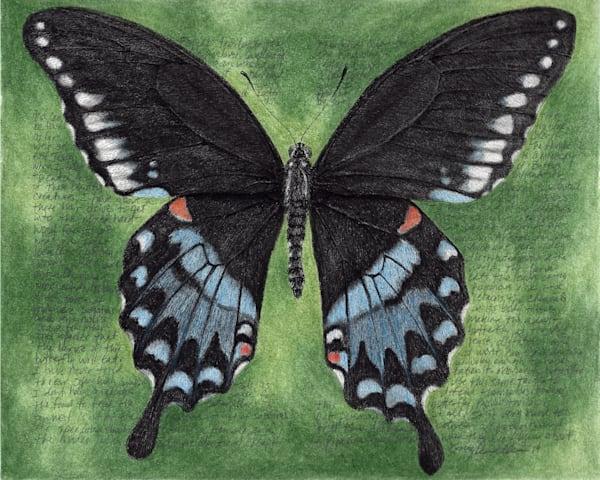 Papiliotroilus Art   Greg Lewallen