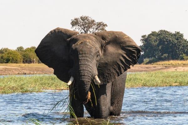 Elephant Warning Lbs 3696 Photography Art | Great Wildlife Photos, LLC