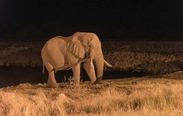 Namibian Desert Elephant Photography Art | Great Wildlife Photos, LLC