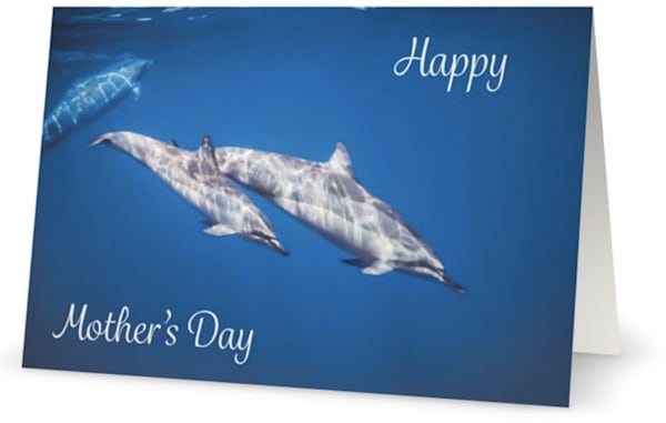 Mother's Day Dolphins Card | Bird In Paradise