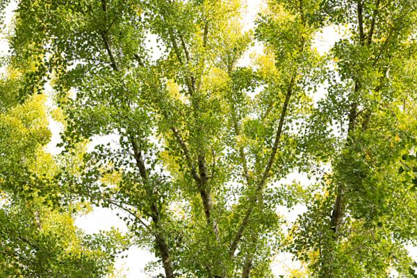 Leaf Explosion Photography Art | Leiken Photography
