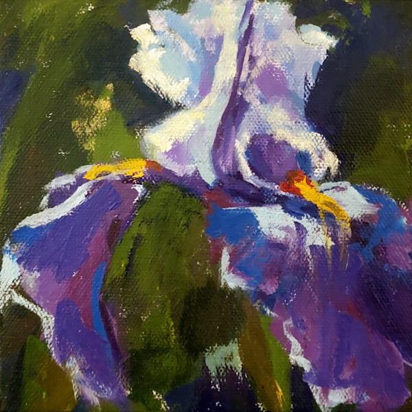 Mini Bearded Iris Art   Jenn Hallgren Artist