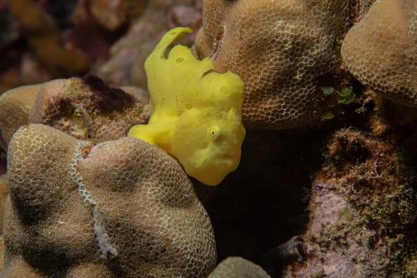Baby Frog Fish Photography Art | Douglas Hoffman Photography