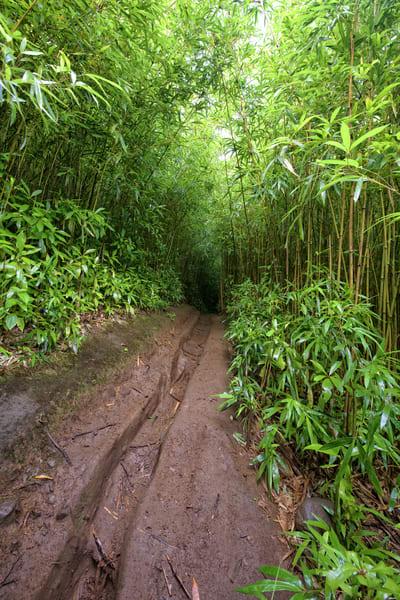 Bamboo Forrest Photography Art   Douglas Hoffman Photography