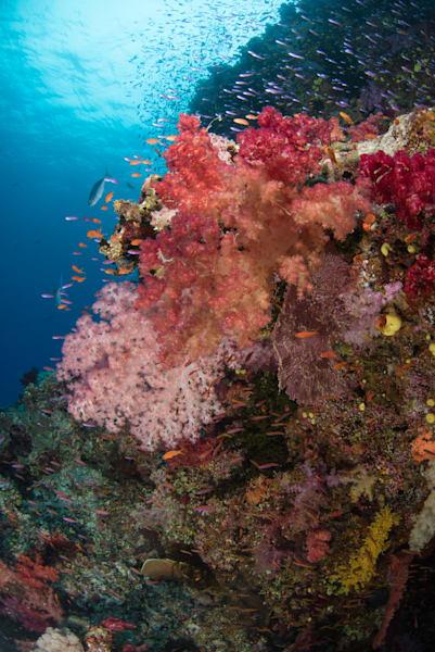 Colorful Reef Photography Art | Douglas Hoffman Photography