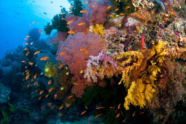 Color Beneath The Sea Photography Art | Douglas Hoffman Photography