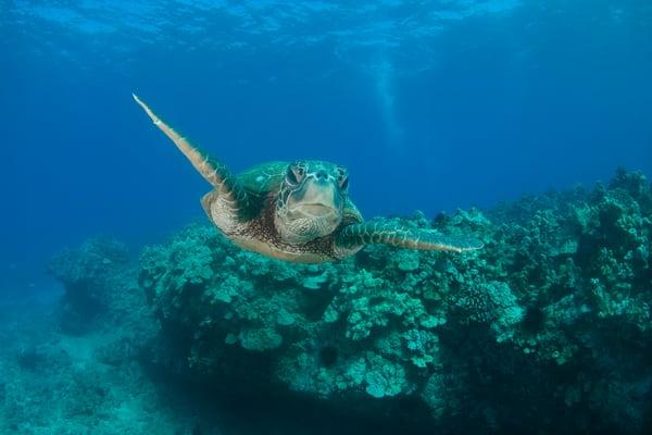 Cruising The Reef Photography Art | Douglas Hoffman Photography