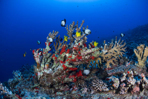 Deep Reef Molokini Photography Art | Douglas Hoffman Photography