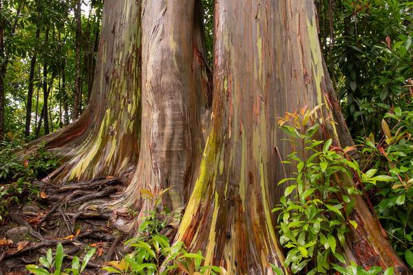 Eucalyptus Grotto Photography Art | Douglas Hoffman Photography