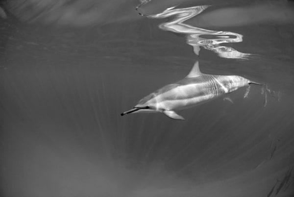 Unique Reflection Photography Art | Douglas Hoffman Photography