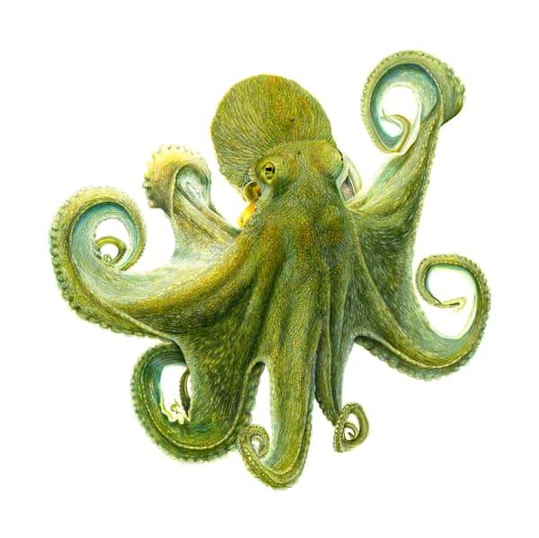"Octopus   ""Oswald"" Art | Gossamer Lane Fine Art"