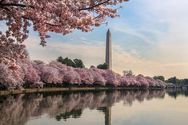 Spring Glory in Washington DC