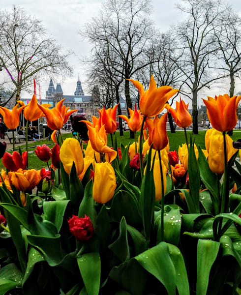 Amsterdam And Tulips, Number Two Photography Art | Photoissimo - Fine Art Photography