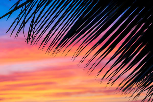 Paiko Palm | Mk058 Art | Pictures Plus