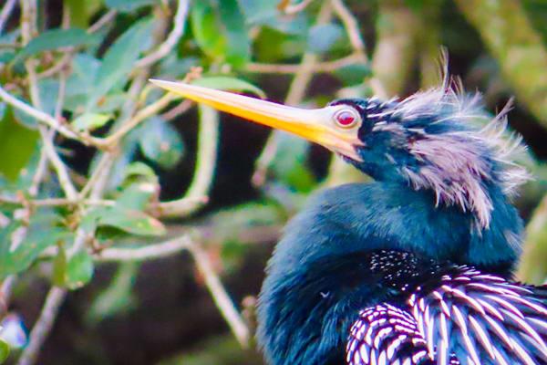 Wannabe Naturalist Anhinga Magazine   Eugene L Brill