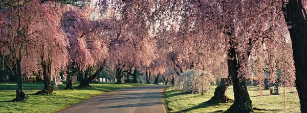 The Glory of Spring - Lexington Cemetery