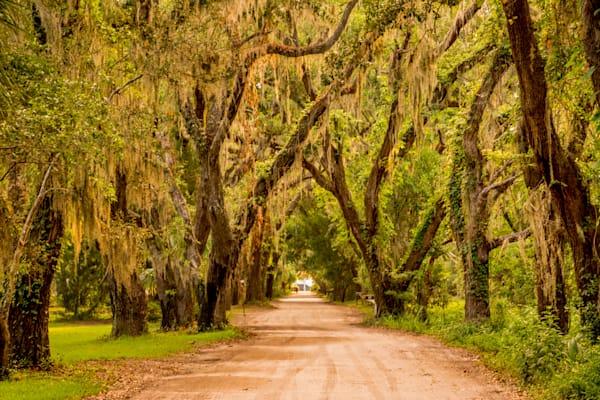 Ave Of Oaks 1 Photography Art   Willard R Smith Photography