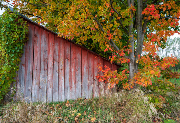 Michigan Fall Barn 0781