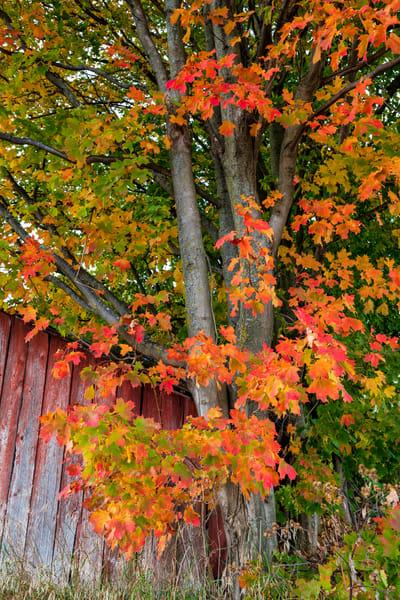 Michigan Autumn Leaves 0774