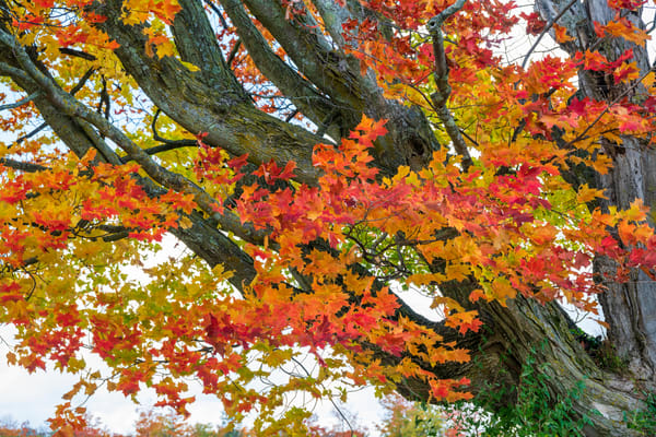 Michigan Fall Colors-0791