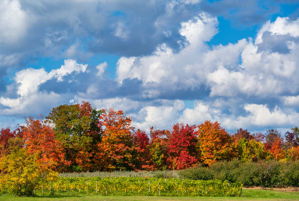 Michigan Fall Backdrop-0795