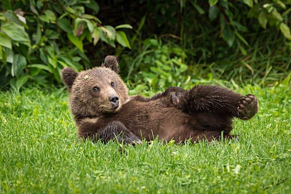 Big Momma S Cub Art   Alaska Wild Bear Photography