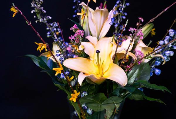 Spring Photography Art | Elizabeth Stanton Photography
