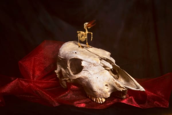Still Life, Past Life Photography Art | Elizabeth Stanton Photography