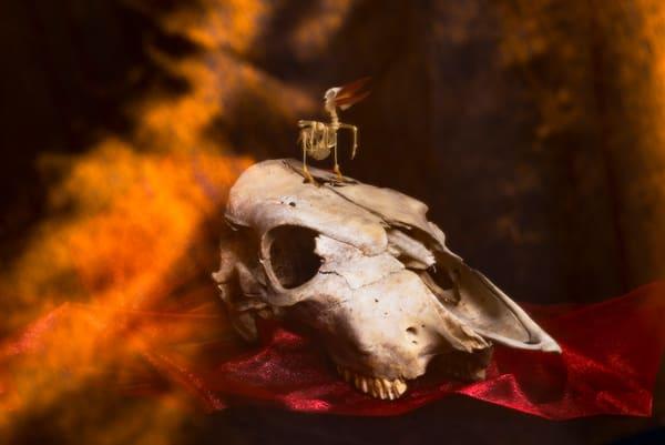 The Burning Photography Art | Elizabeth Stanton Photography