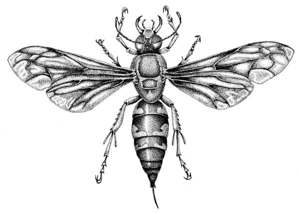 Cicada Killer Art   Greg Lewallen