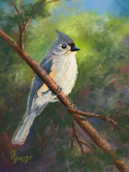 Tufted Titmouse Art | Mark Grasso Fine Art