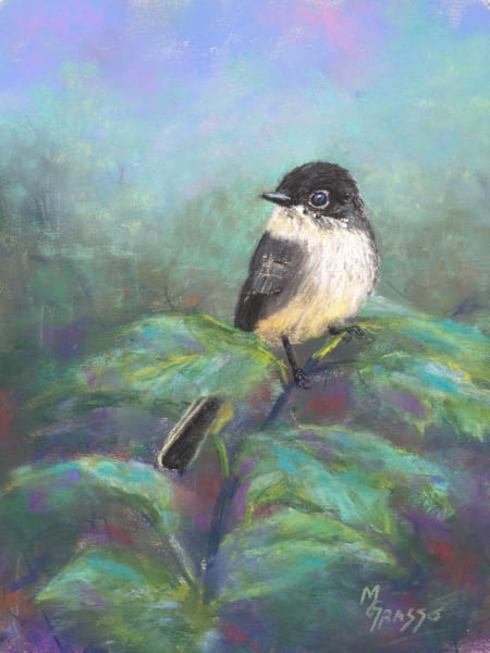 Eastern Phoebe Art | Mark Grasso Fine Art