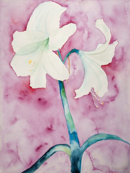 White Amaryllis Art | Ruth Feldman Fine Art