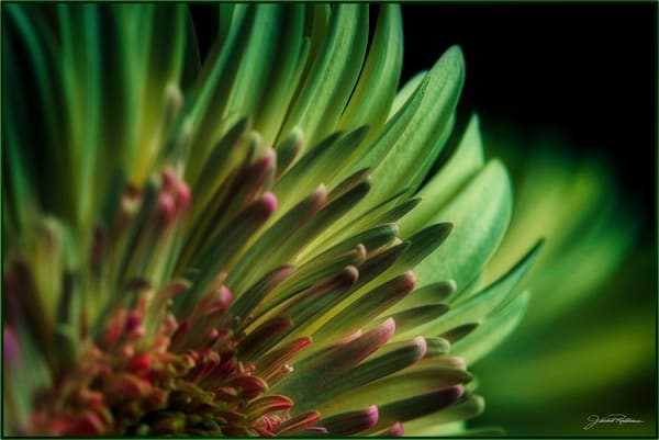 flower photography closeup green contemporary photographicprints jackierobbinsstudio buyartonline