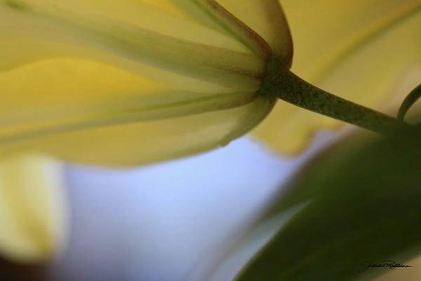 soft flowers closeup blemded shadowandlight photography jackierobbinsstudio photographicprints buyartonline