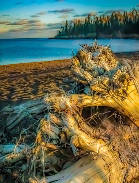 Drift Wood Photography Art | Silver Spirit Photography