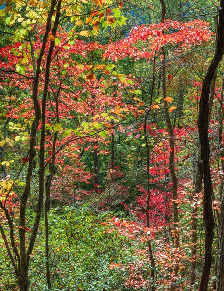 Ky Fall 8968 Photography Art | Jeff Rogers Photography, Inc.