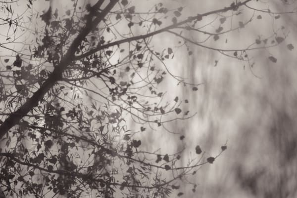 arboreal vision 1