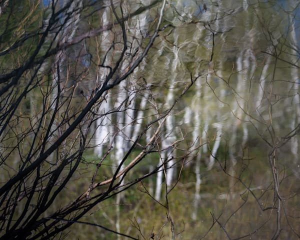 Branch Impression 1 Photography Art | matt lancaster art